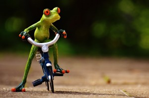 frog-1701109_1280